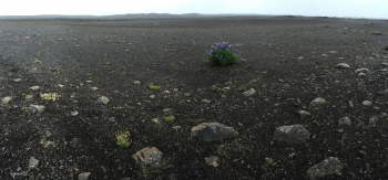 PANORAMICA A LA RUTA 1 ANANT A AKUREYRI  – NORD D'ISLANDIA