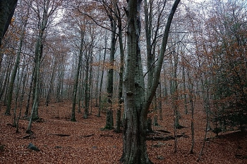 TARDOR - Parc natural del Montseny