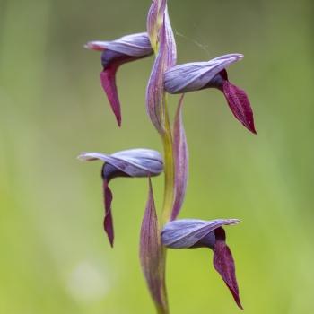 Flora y hongos