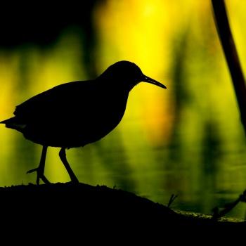Aves en su habitat