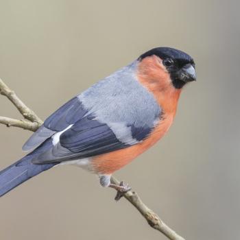 Aves colección-Birds Spain (143 especies)