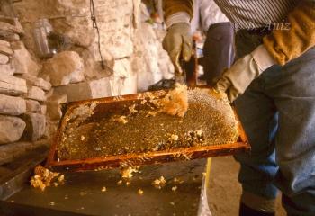 Rascando el exterior para extraer la miel
