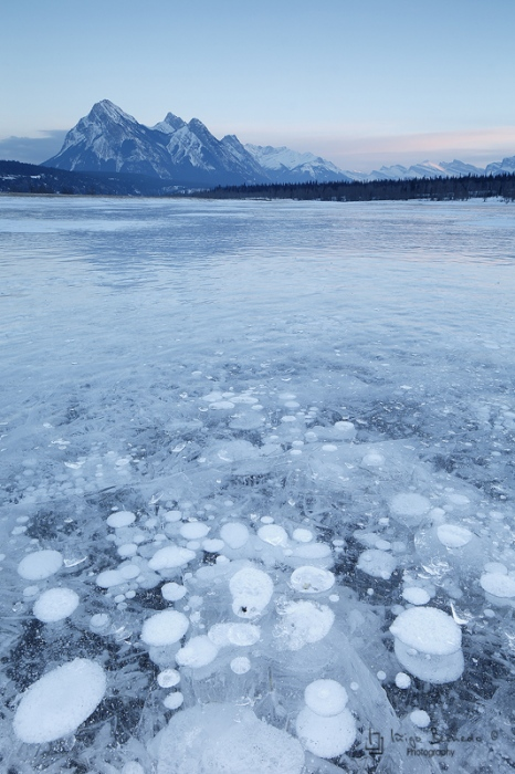 Preachers Point, Abraham Lake, Kootenay Plains