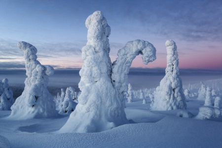 Congelados, Riisitunturi, Finlandia, Febrero 2013.