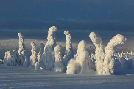La taiga, Riisitunturi, Finlandia, Febrero 2013.