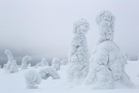 Conversando, Riisitunturi, Finlandia, Febrero 2013.