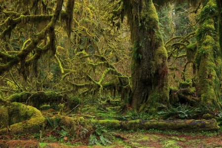 Hoh Rain Forest, Olympic National Park, Washington, April 2011.