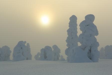 Niebla dorada I, Riisitunturi, Finlandia, Febrero 2013.