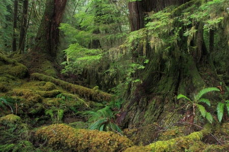 Quinault Rain Forest, Olympic National Park, Washington, April 2011.