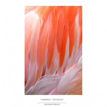 Flamingo-studio(c)