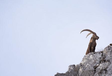 El señor de las alturas, Alpes.