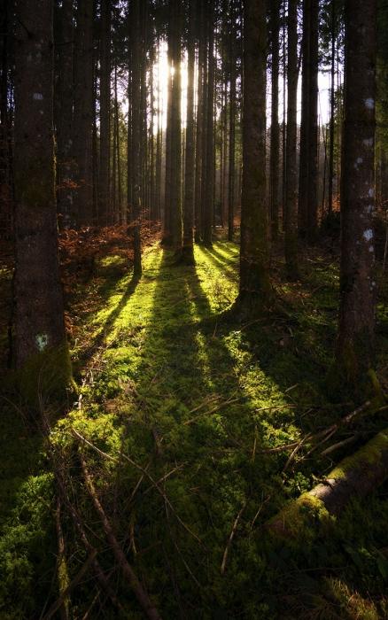 La luz del bosque, Alpes.
