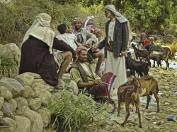 Wady Al Dabat, mercado de ganado