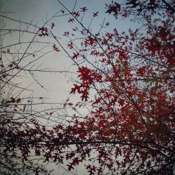 Árbol en otoño | 2015 | Oporto, Portugal
