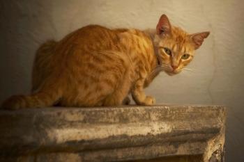 Gato | 2008 | Algún lugar de Malta