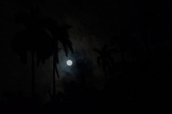 The moon ant the palm, travels of photography to cuba led by louis alarcon