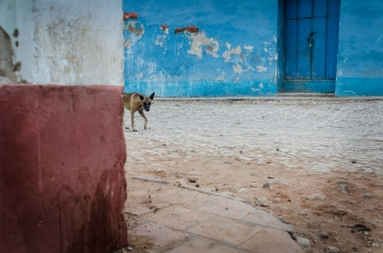 mistery dog in cuba, fine art by louis alarcon