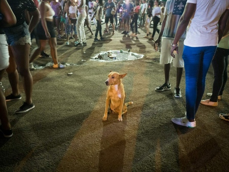 lonely dog in the middle of carnivals in Cuba.