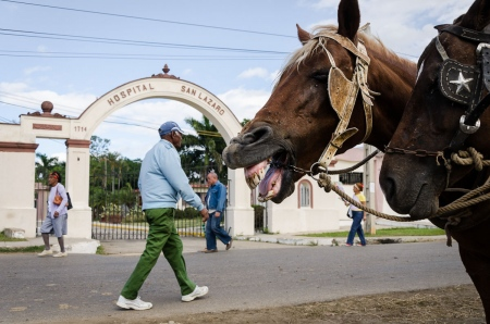 smiling horses in havana cuba
