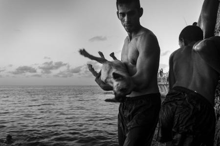 dogs in Cuba by louis alarcon