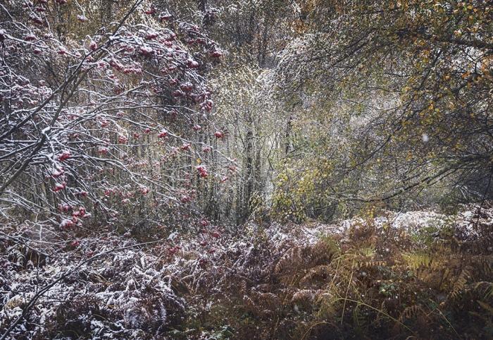 Entre el otoño y el invierno
