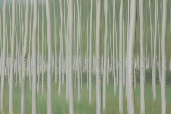 Homage to Touluse-Lautrec. Impressionist forest