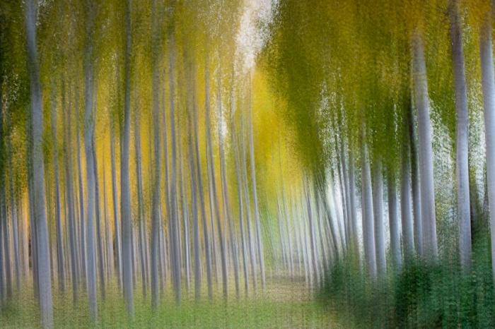 Homage to Renoir