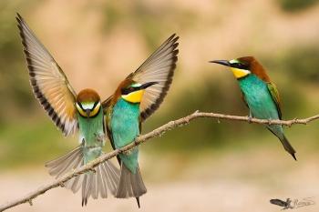 Finalista en el Concurso Internacional de Fotografía de Naturaleza Oasis Photo Contest - 2016 (ITALIA) categoría