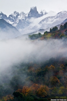Nieve, bruma, monte, bosque, otras partes fundamentales de Asturies.