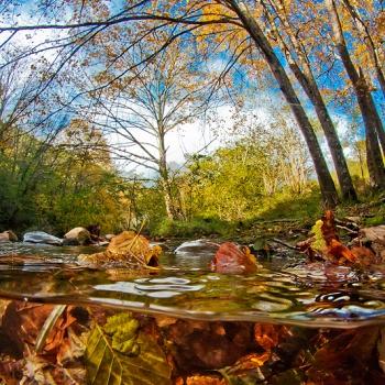 Ríos y bosques