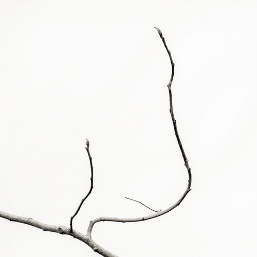 ramas, hojas y troncos.-branches, leaves and trunks-.