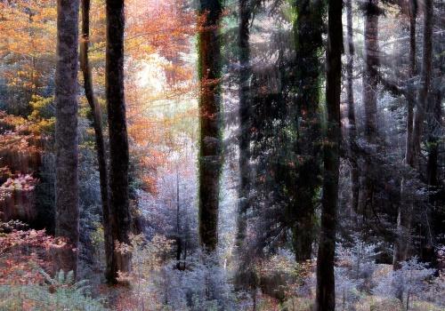 El bosque en la memoria