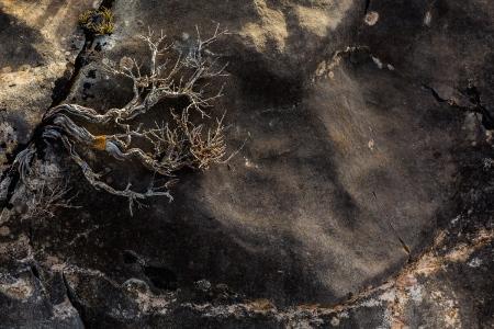 Uge Fuertes, Teruel, arte, creatividad,fotografia, metáfora visual, simbolismo, naturaleza,  vegetal, art, creativity, expresión,arboles, alma, exposición,composición, exposición fotográfica, To