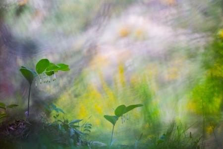 Uge Fuertes, Teruel, arte, creatividad,fotografia, metáfora visual, simbolismo, naturaleza,  vegetal, art, creativity, expresión, alma, exposición,azafrán, flores, desenfocando la mirada, composic