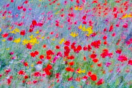 Uge Fuertes, Teruel, arte,amapola,impresionismo, barridos, poppy, creatividad,fotografia, metáfora visual, simbolismo, naturaleza,  vegetal, art, creativity, expresión, alma, exposición, flores, de