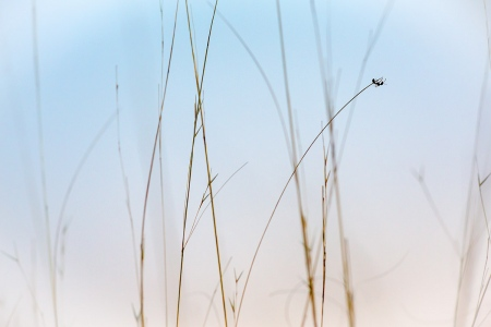 Uge Fuertes, Teruel, arte,impresionismo, creatividad,fotografia, metáfora visual, simbolismo, naturaleza, art, creativity,pintura, pint, dream, insecto,hormiga,equilibrista,formica,