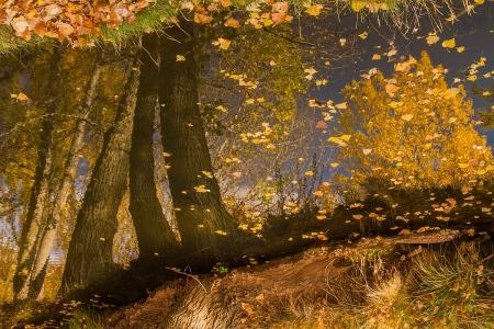 Uge Fuertes, Teruel, arte, chopos, reflejos,  creatividad,fotografia, metáfora visual, simbolismo, naturaleza,  vegetal, art, creativity, composición,picture,painting ,otoño, autumn