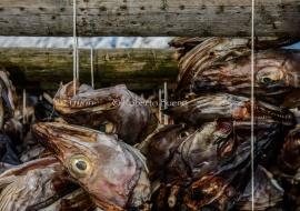Skrei. El bacalao de invierno