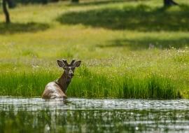 El baño del ciervo. Serrejón. Cáceres