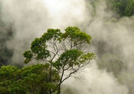 Fumarolas. Lagoa das Furnas. Isla de Sao Miguel