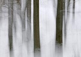 Mágico invierno