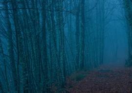 Castaños en la niebla. Reserva de la Biosfera de las Sierras de Béjar y Francia