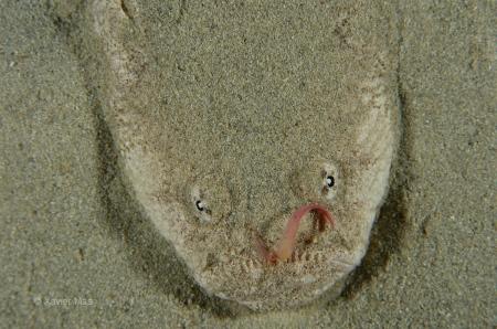Rata (Uranoscopues scaber). Ibiza.