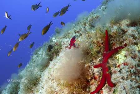 Tercer premio Fotografía submarina C. N. Santa Eulalia. Estrella (Ibiza).