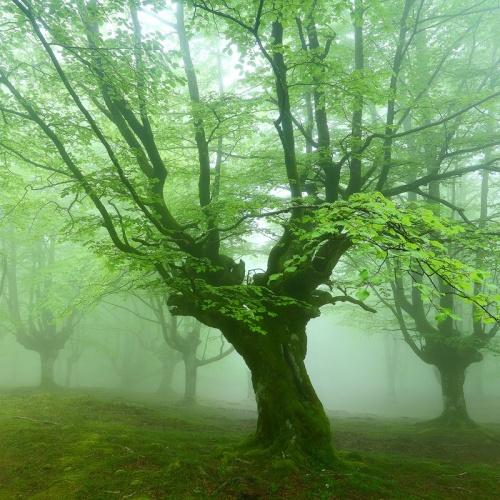 escondidos en el bosque