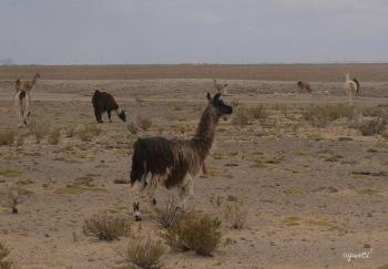 SALAR UYUNI - BOLIVIA