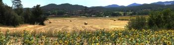 Camp de blat, a PALS - Catalunya