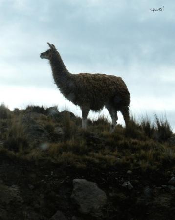 ALTIPLANO - COCHABAMBA - BOLIVIA