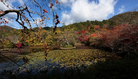 TEMPLE KINKAKU-JI – KIOTO – JAPÓ