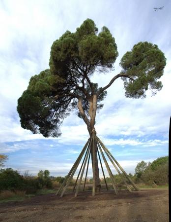 PI DE XANDRI - Sant Cugat del Valles VALLES OCCIDENTAL